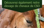 Découvrez également notre élevage de chevaux de CSO